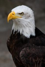 Vigilance for Liberty