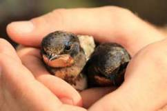 birds in hands